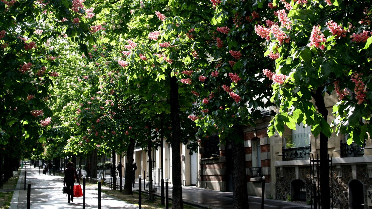 Why City Trees Are Needed More Than Ever