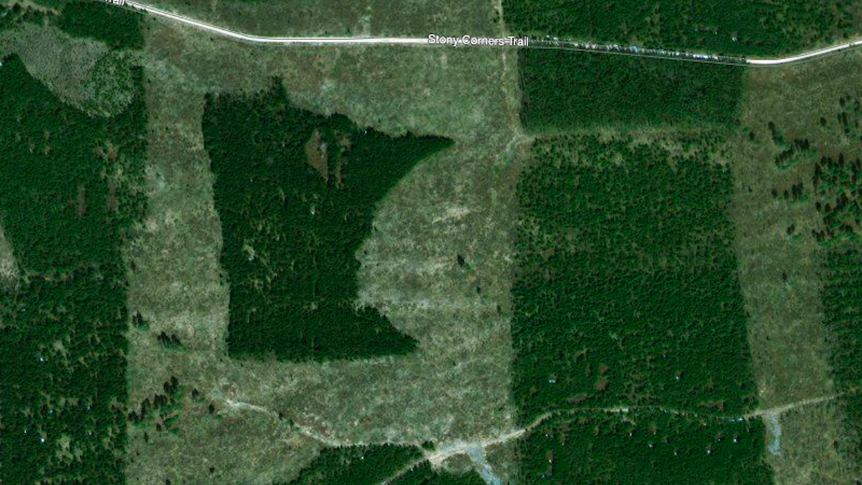 ​A Minnesota-shaped forest in Minnesota