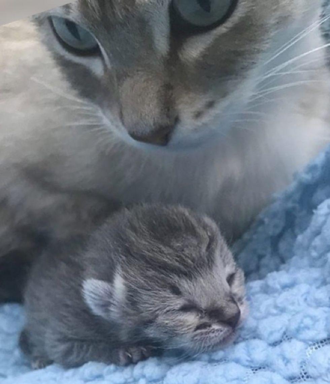 cat, tiny kitten, cute