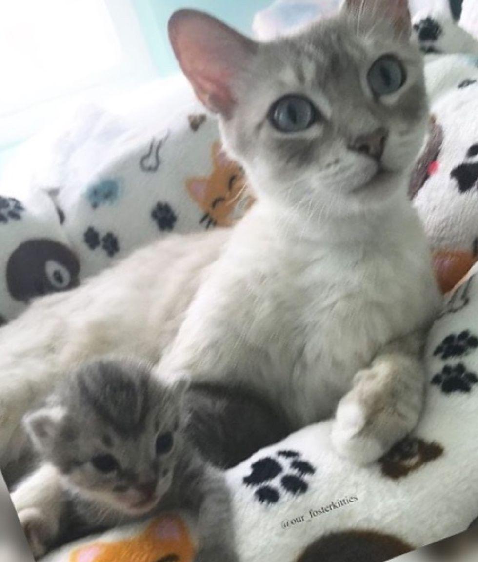 cat mom, kitten, cute, cuddles
