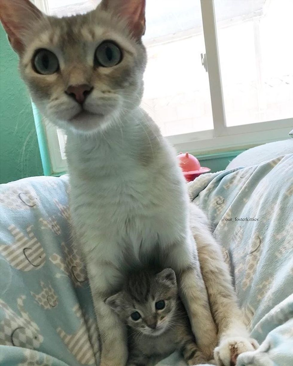cute, protective cat mom, kitten, cuddle