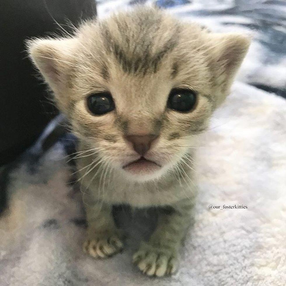 cute, kitten, tabby