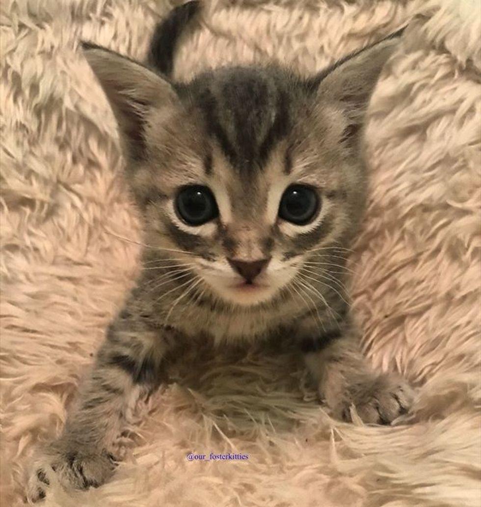 cat, tabby, kitten, cute
