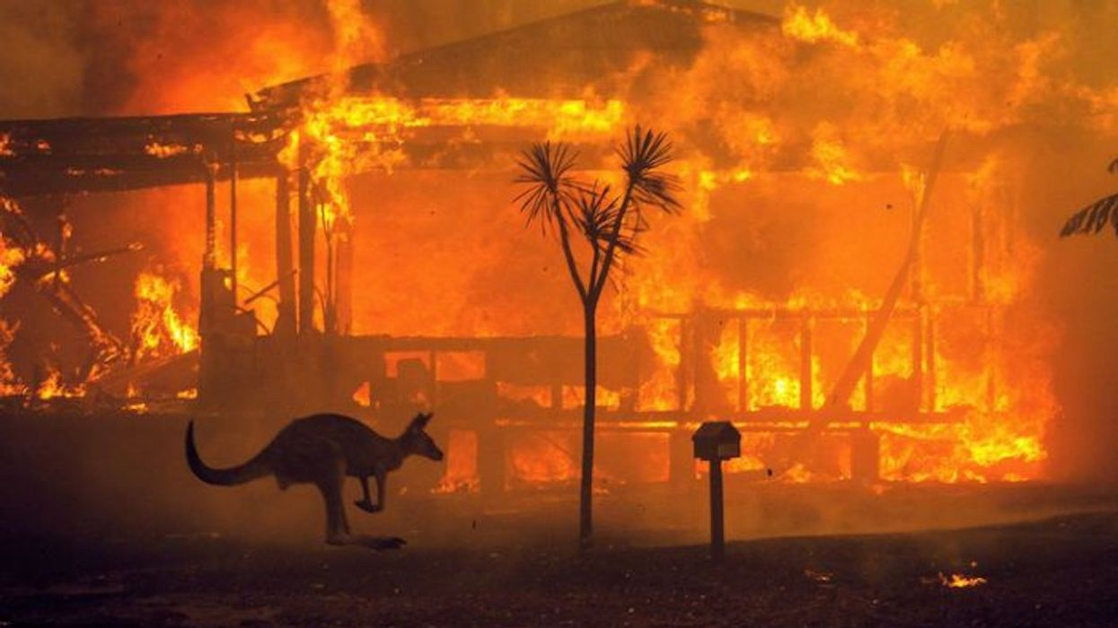 Australia's Fires Harmed 3 Billion Animals, New Report Finds