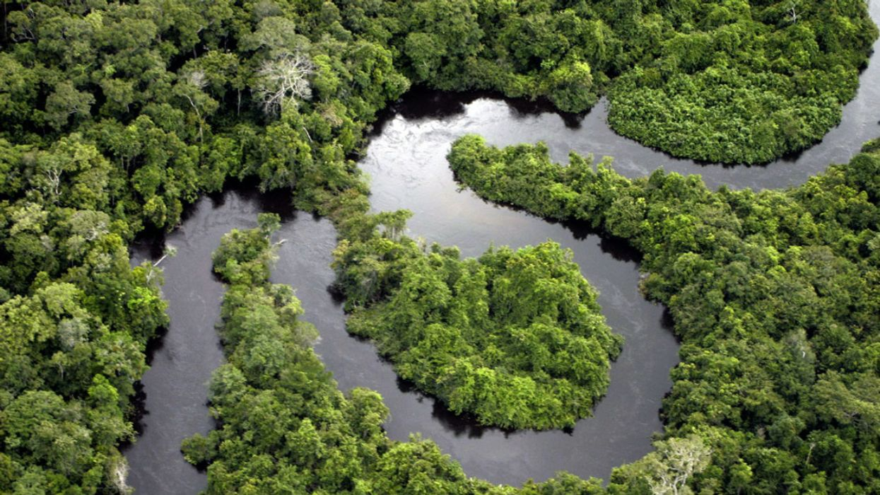 Scientists Form Panel in Attempt to Save the Amazon