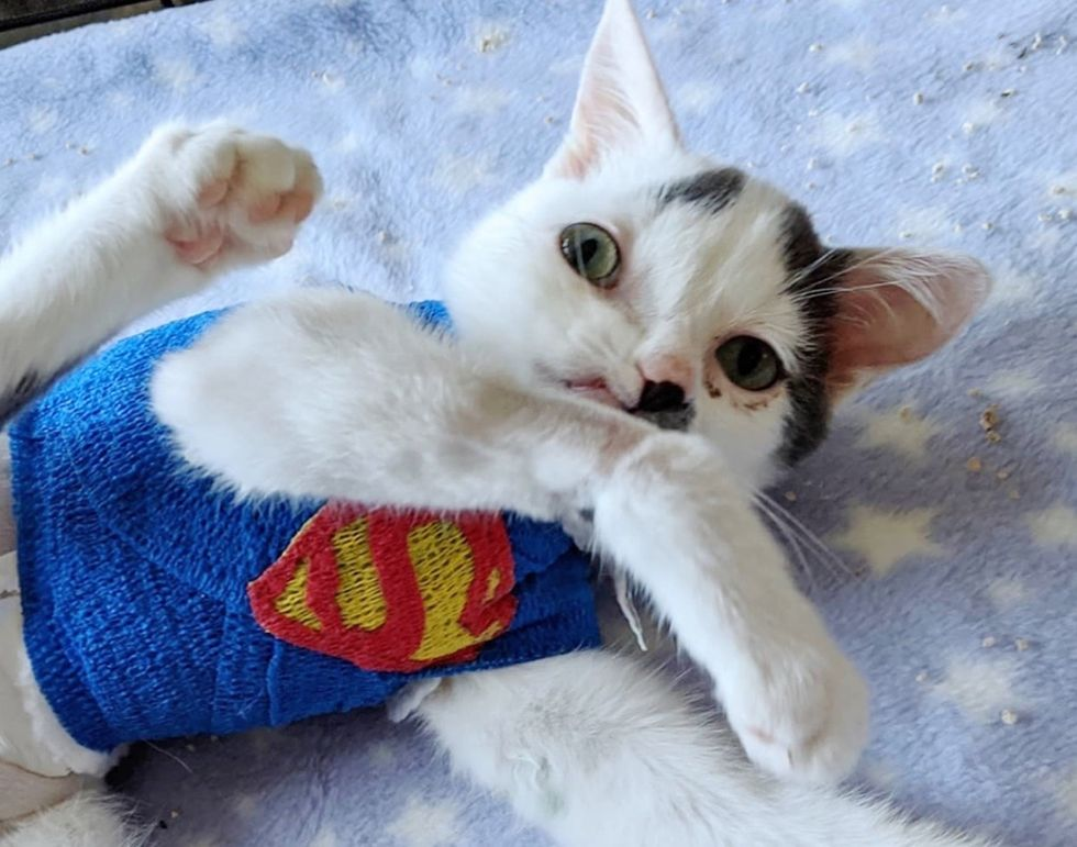 super cat, special needs, cute kitten