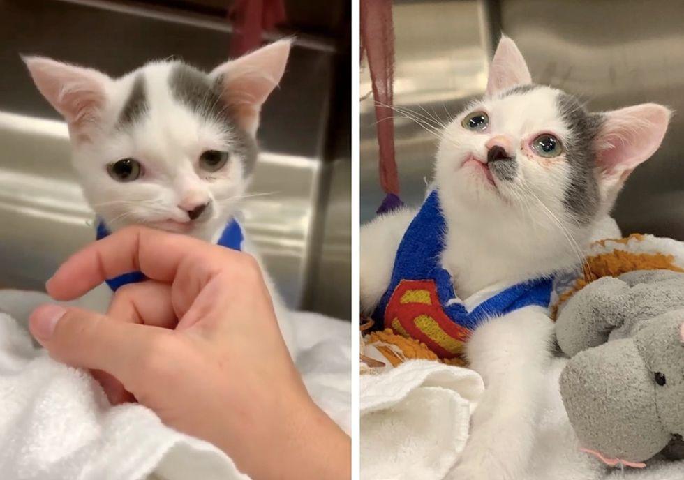 super cat, sweet kitten, cute
