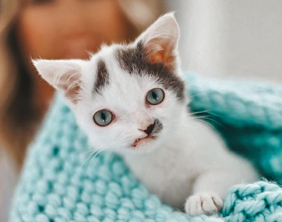 sweet kitten, cute