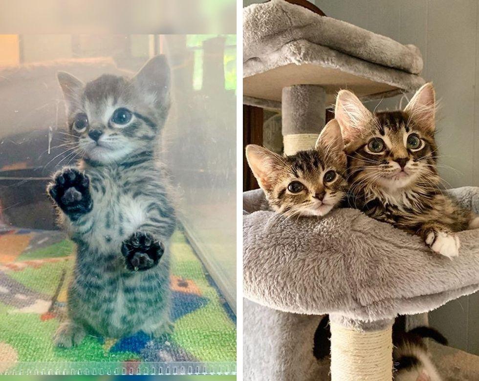 kittens, cute, tabby