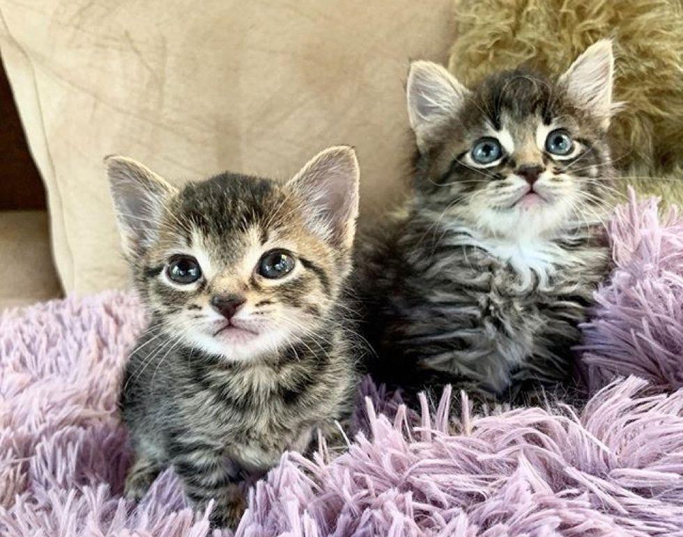 best friends, tabby kitten, cute