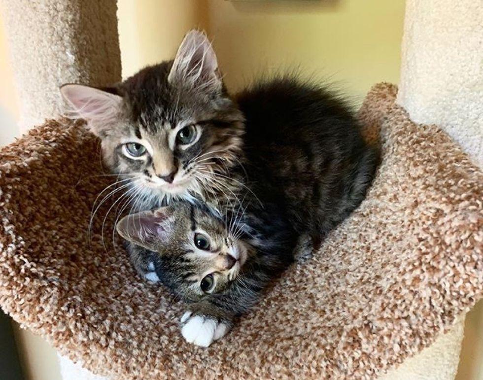 hug, cuddle, tabby, kitten