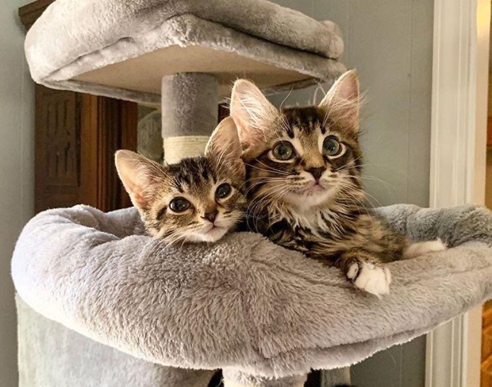 best friends, cuddle, kittens