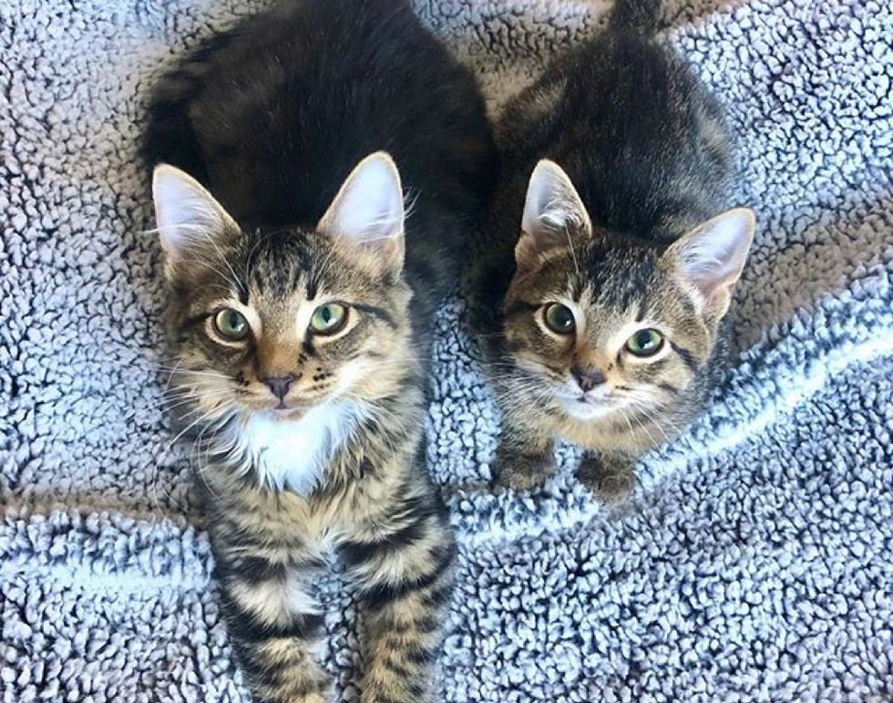 tabby, kittens, cute