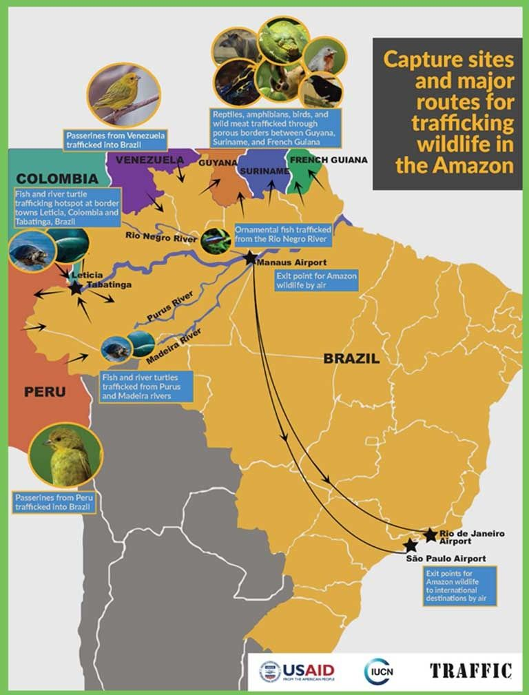 Picture of: Brazilian Amazon Has Lost Millions Of Wild Animals To Criminal Networks Report Finds Ecowatch