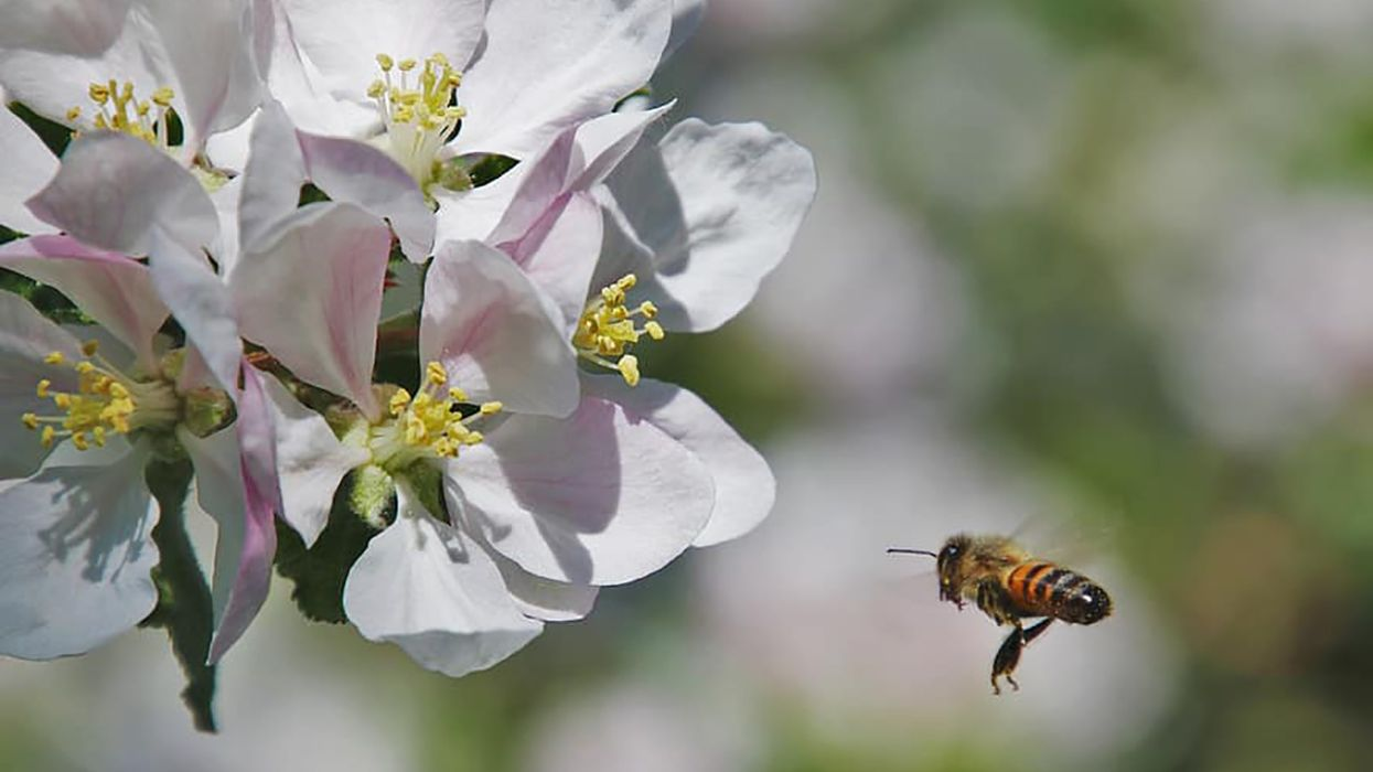 Lack of Wild Bees Causes Crop Shortage, Could Lead to Food Security Issues
