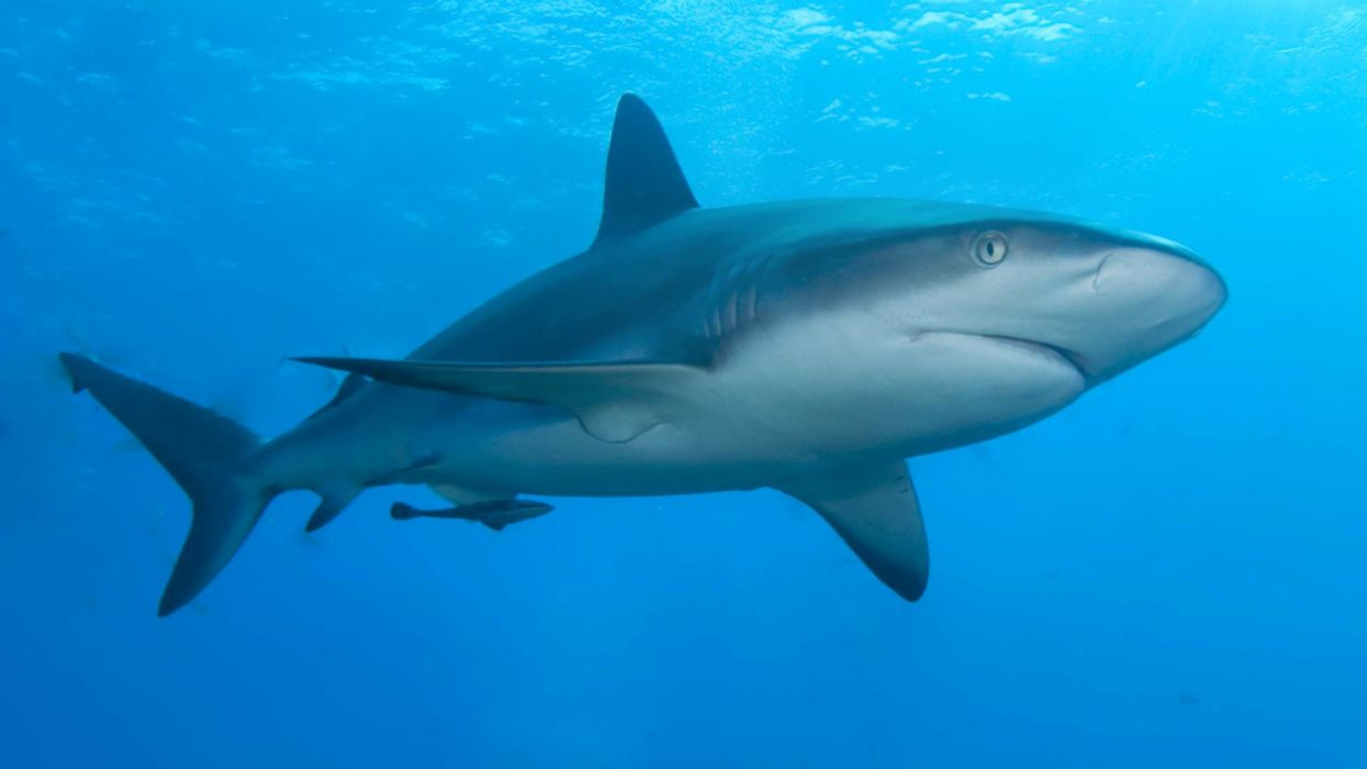 10 Little-Known Shark Facts