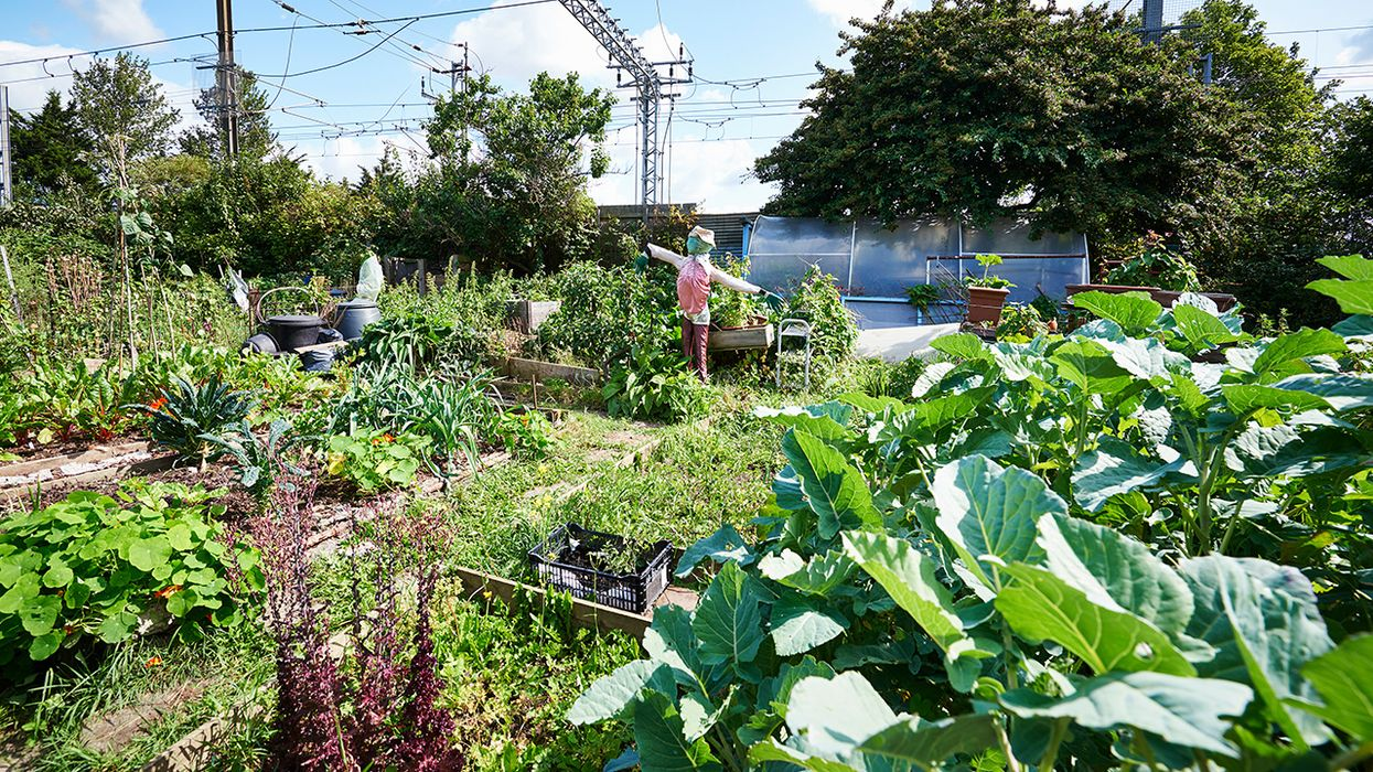 Farms for the Future: 20 Organizations Protecting Farmland