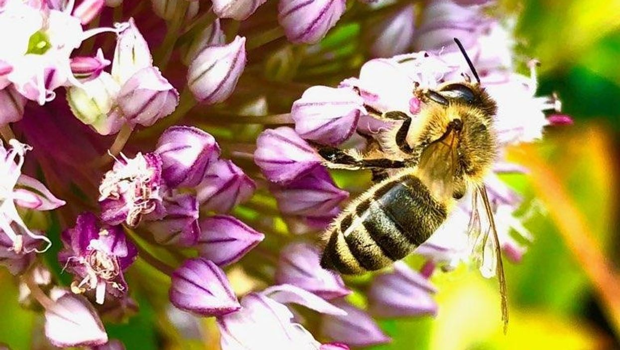 Rutgers-led research finds bee decline threatens crop yields