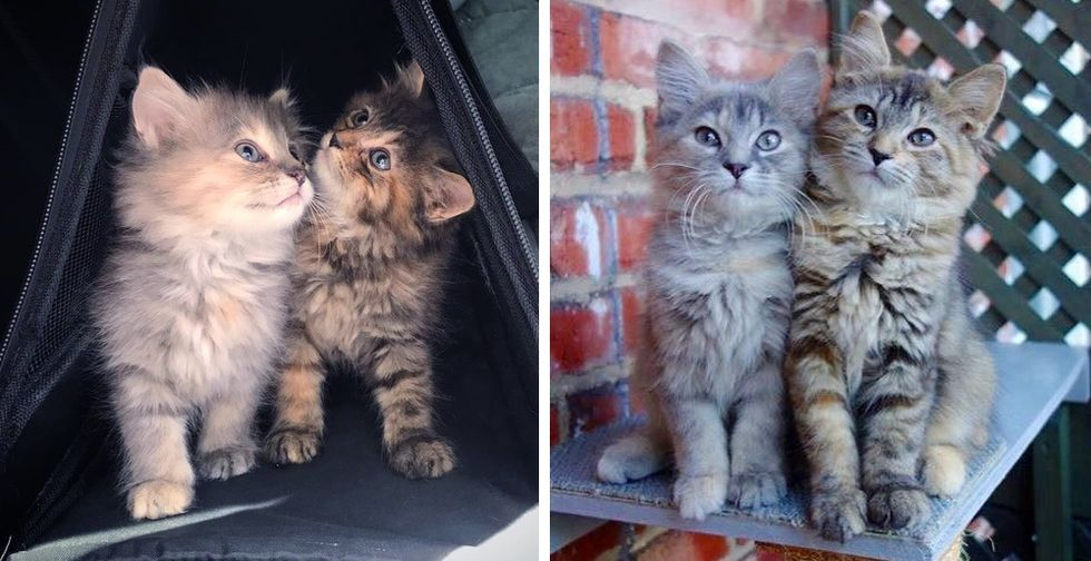 Kitten Sisters Stick Together and Never Part After They Were Rescued