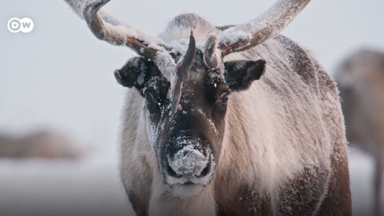 Reindeer and Their Nomadic Herders Face Climate Change