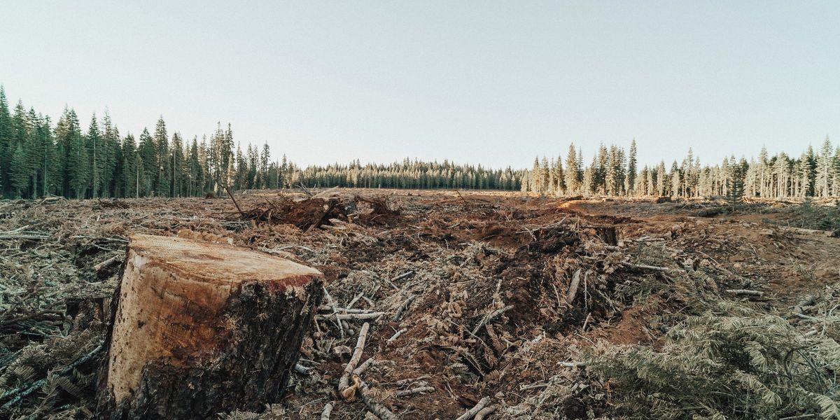 deforestation wildlife habitat
