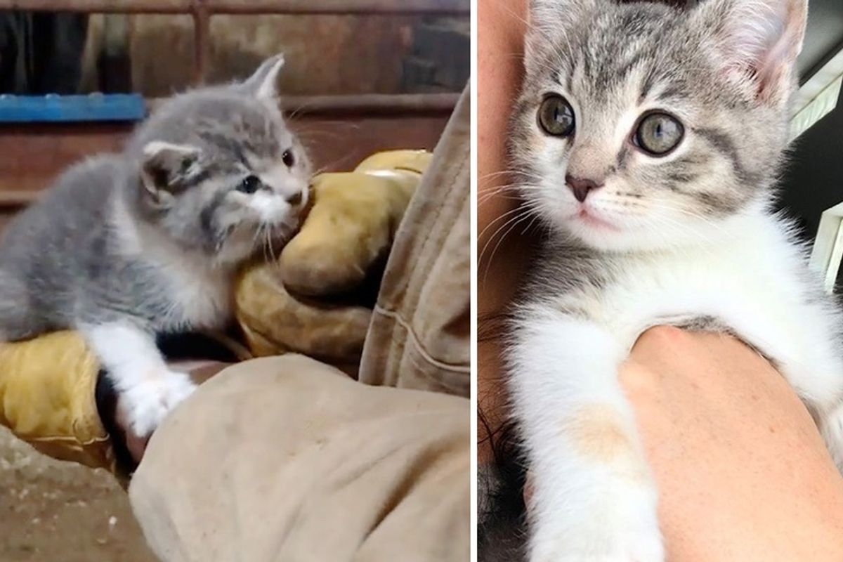 Stray Kitten Hopped into Hearts of Family and Blossomed into Gorgeous Cat