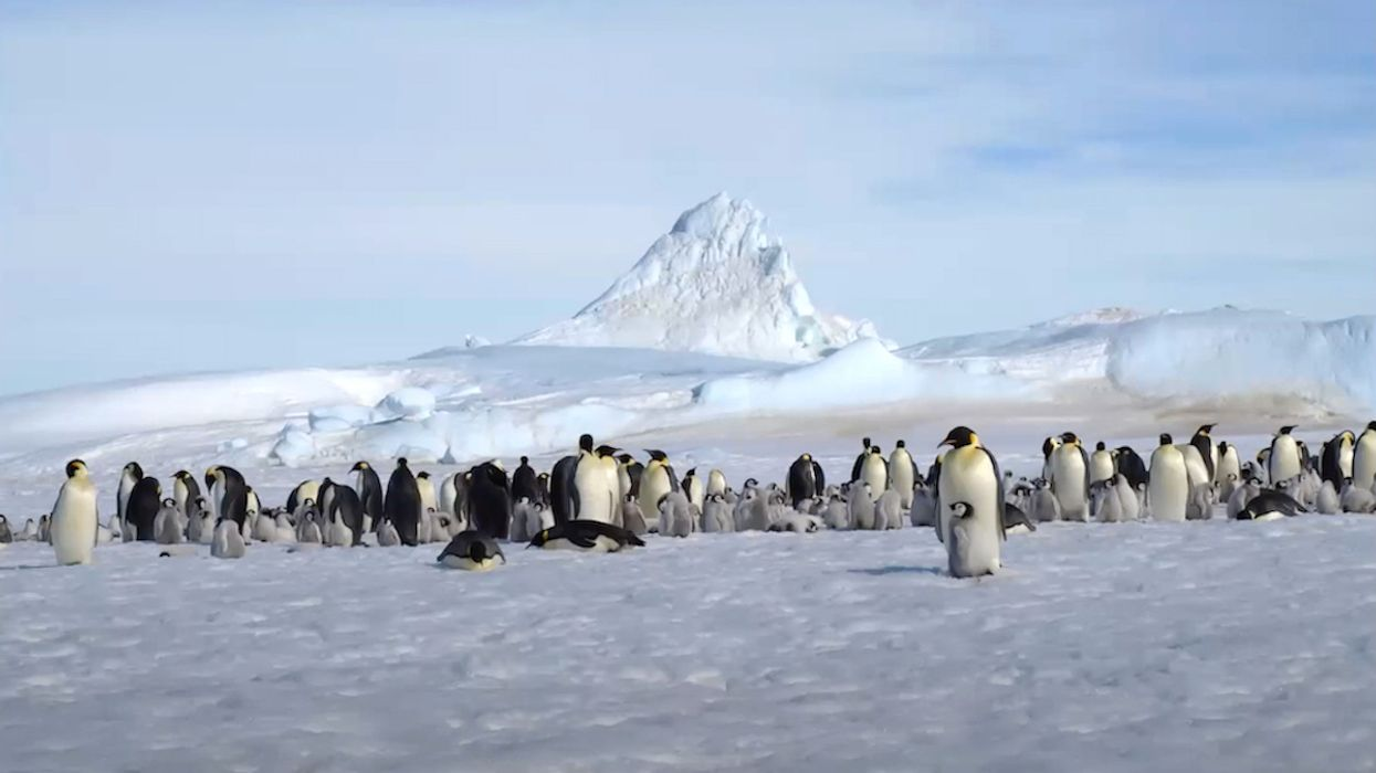 Satellite Imagery Shows New Penguin Colonies in Antarctica