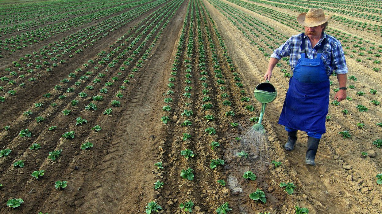 Social and Environmental Justice Activists React to EU Farm to Fork Strategy