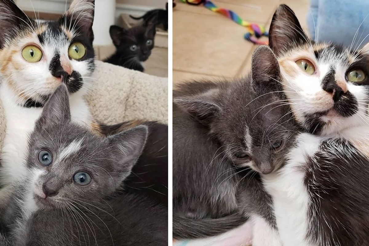 Cat and Her Overly Attached Kitten Hope for Home Together After Life on the Streets