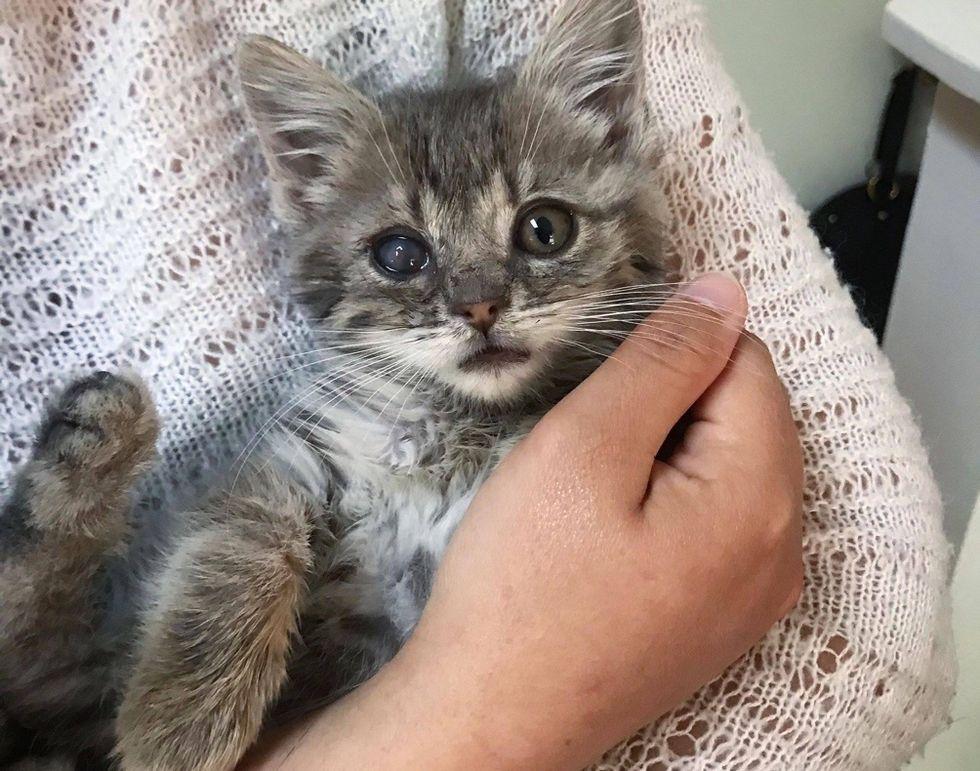 kitten, tabby, eye