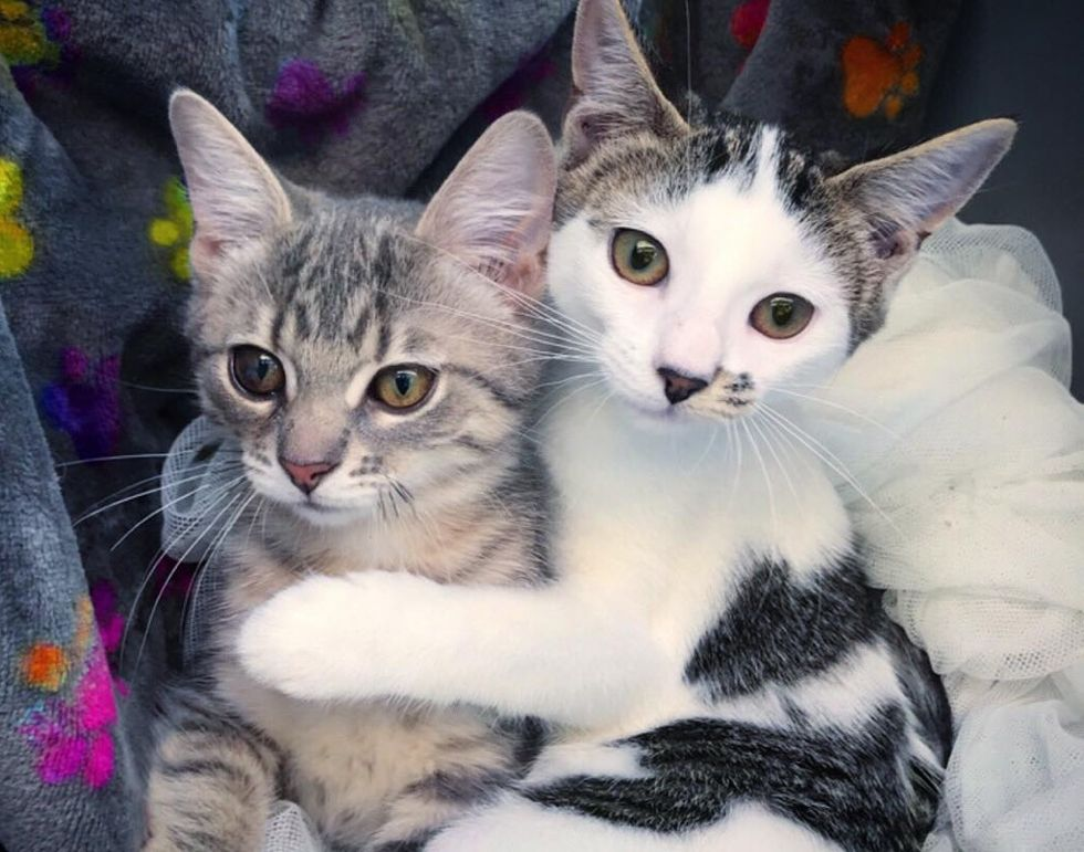 kittens, cuddle, best friends