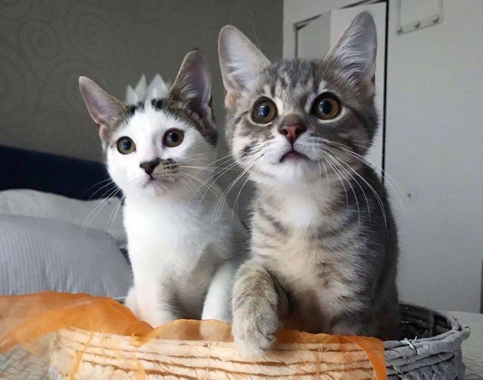 cute kittens, cat basket