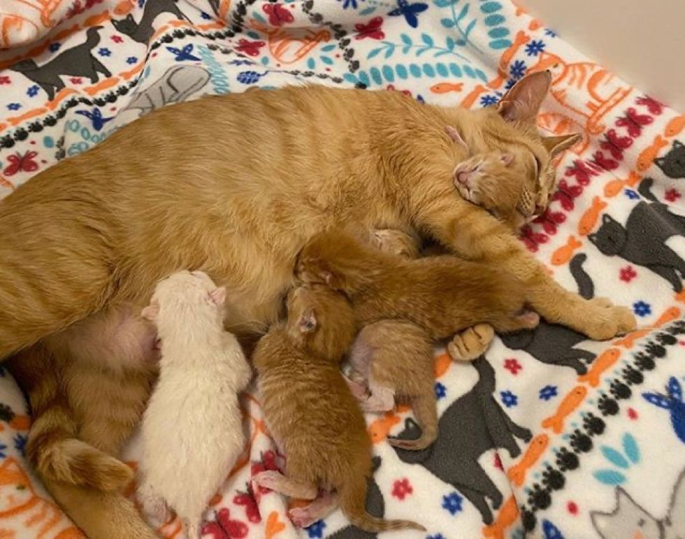 cat mom, kittens, babies