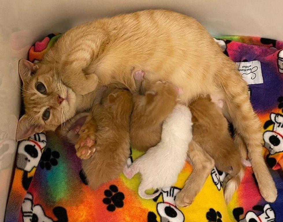 nursing cat mom, baby kittens