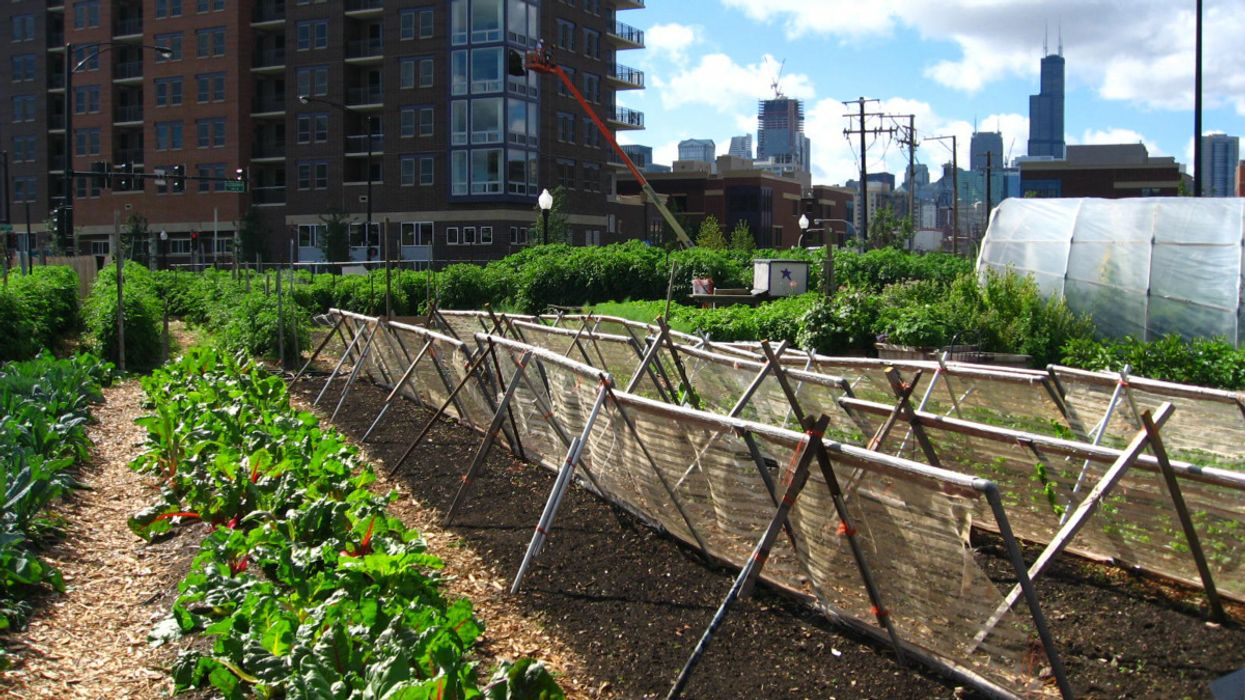 54 Million People in the U.S. May Go Hungry During the Pandemic — Can Urban Farms Help?