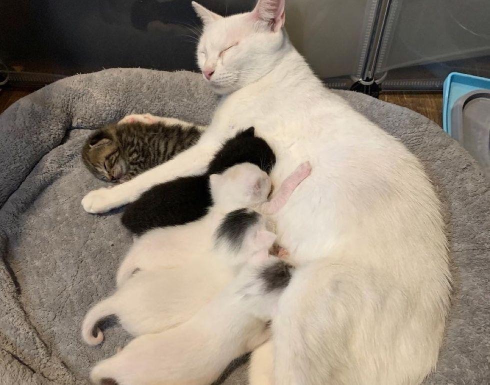 cat mom, kittens, nursing