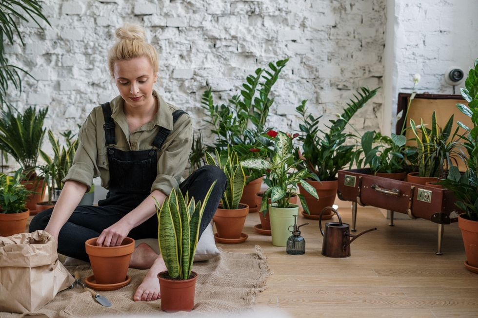 If You're Looking To Bring Peace And Happiness Into Your Life, It's Time To Get A Houseplant