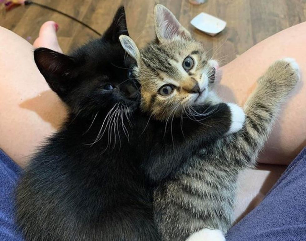 hug, best friends, cute kittens
