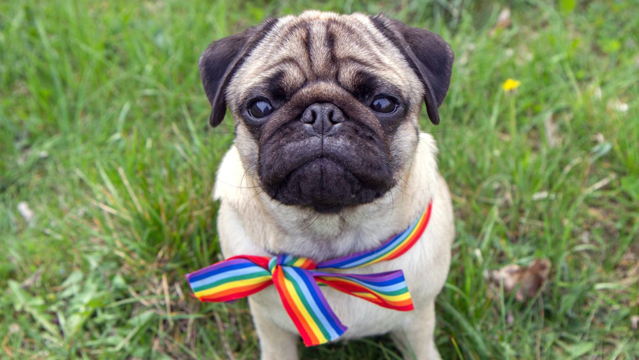 Study analyzes the relationship between pets and their young LGBTQ owners