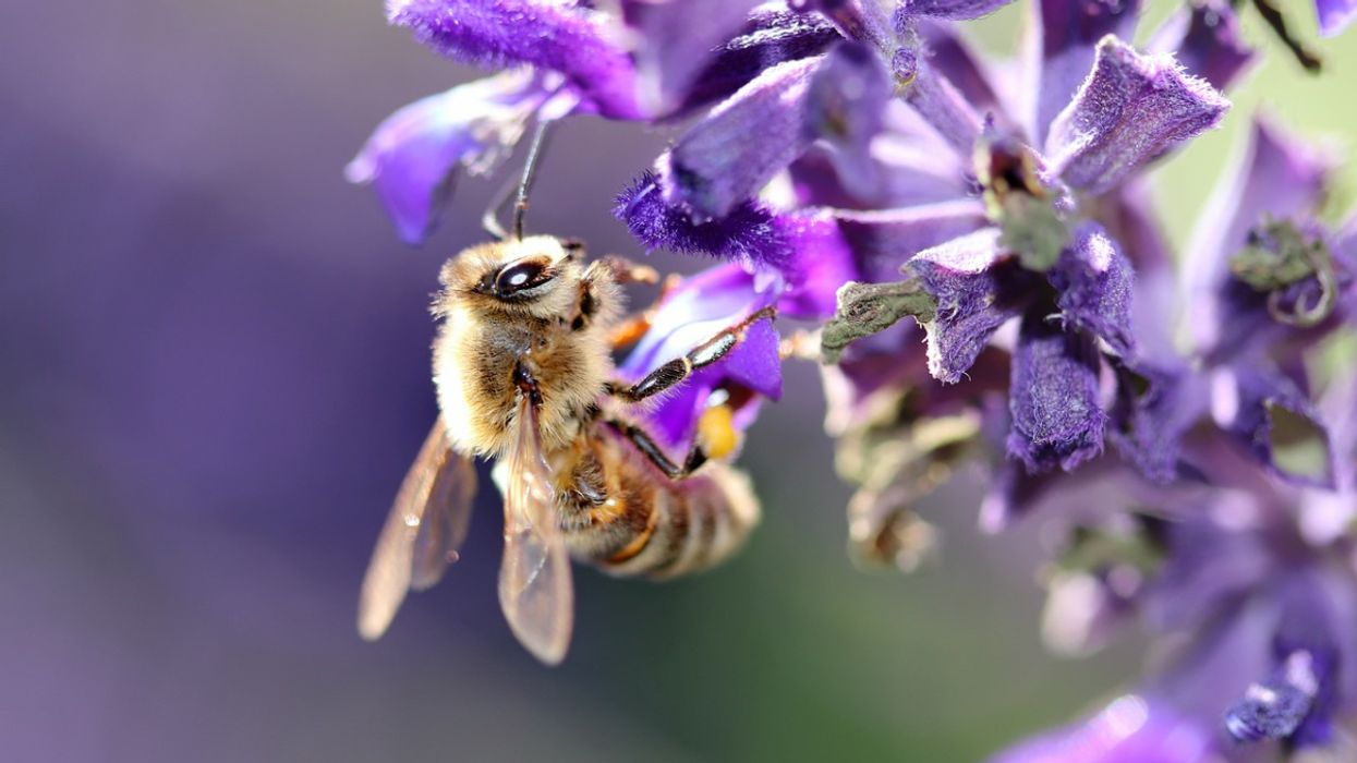 15 Organizations and Initiatives Helping to Save the Bees