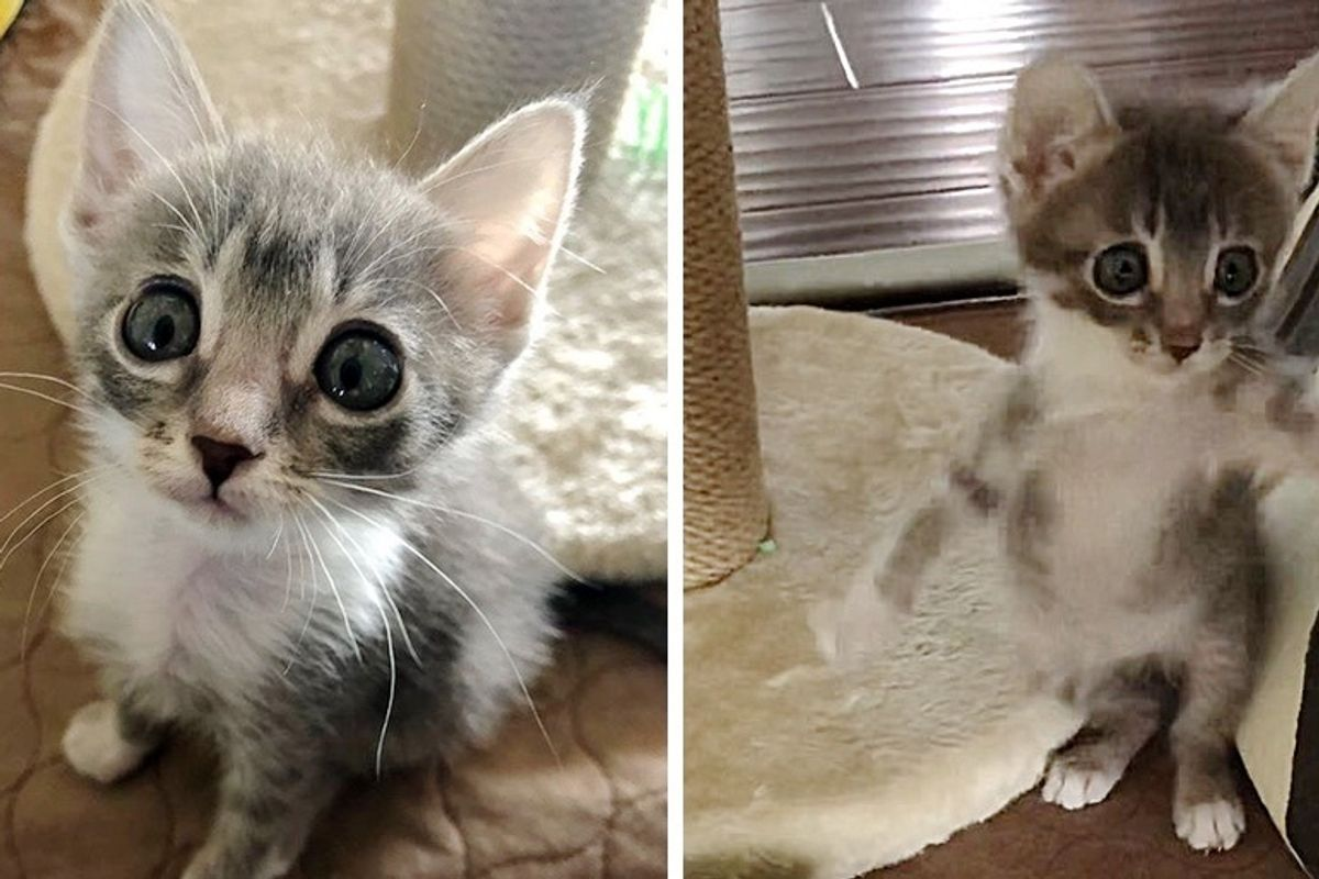 Pint-sized Kitten with Big Eyes Insists on Living Full Life After She Was Found on Street