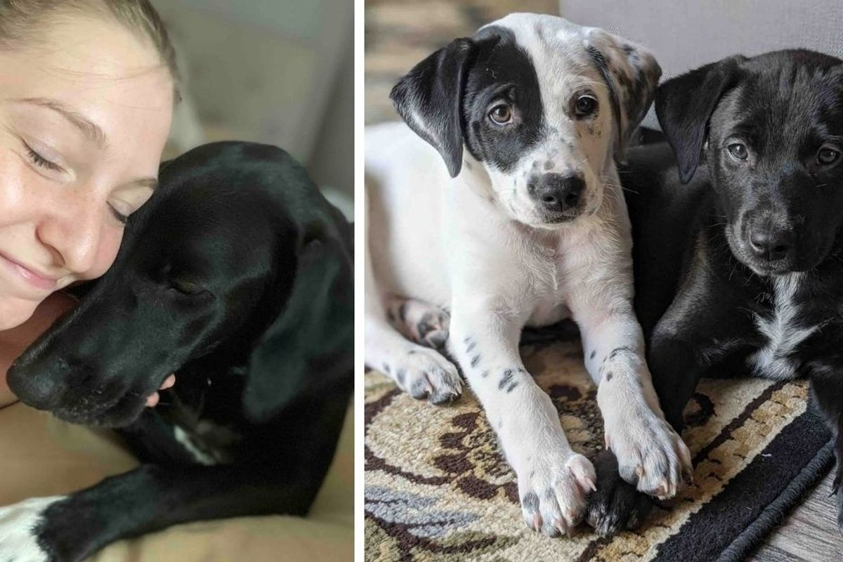 Sisters thought they were rescuing an injured dog, but ended up with 10 lovely pups instead