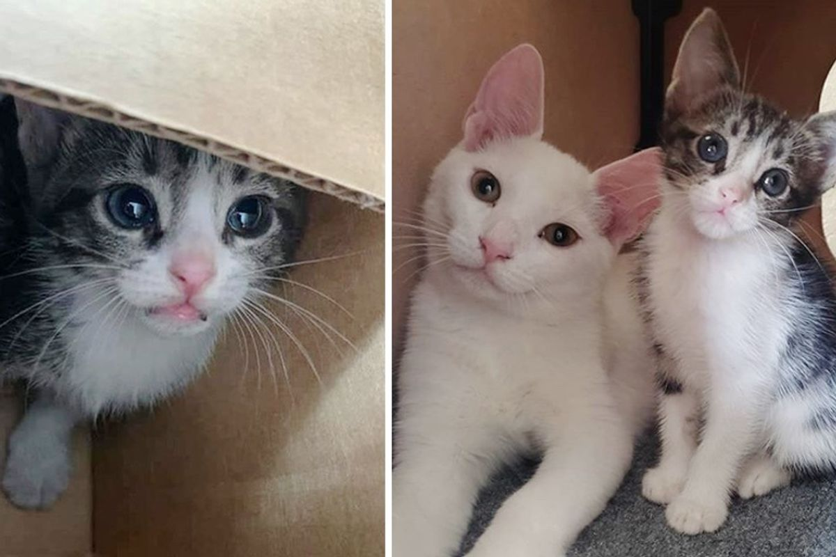3 Cats Take Stray Kitten Under Their Wing After She Was Found on Busy Road
