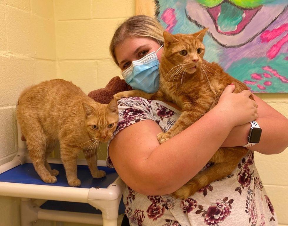 orange cats, tabby, bonded pair