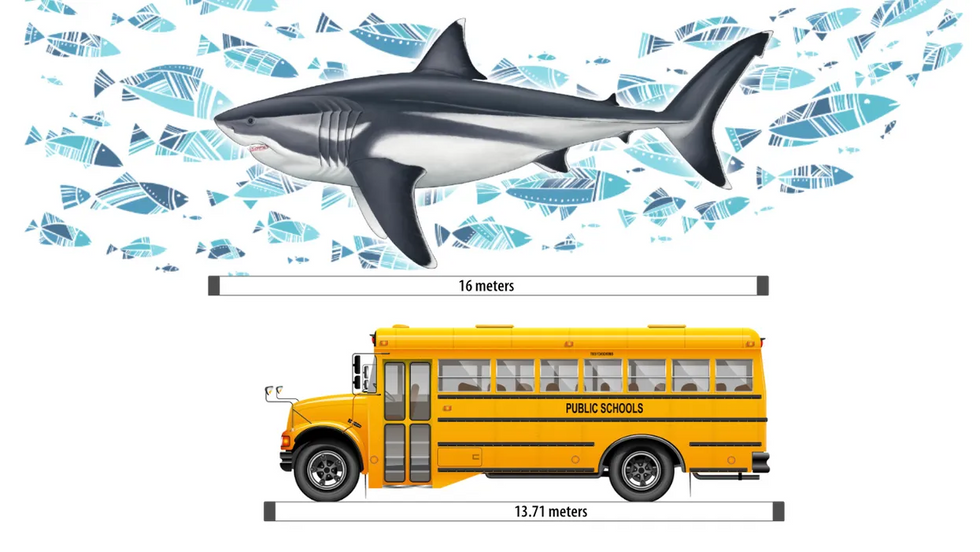 megalodon compared to a school bus