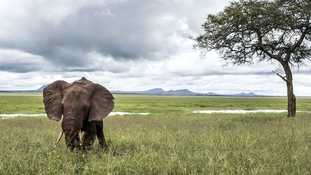 Humans Are Destroying Wildlife at an Unprecedented Rate, New Report Warns