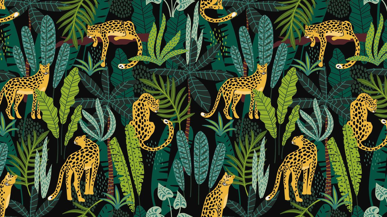 cat and plants pattern