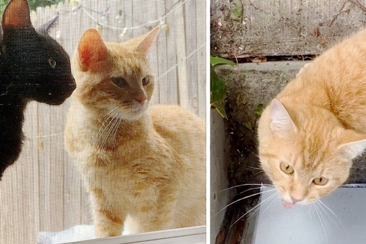 Stray Cats Walk Up to Doorstep, Ask to Be Let Inside So They Can Have Their Kittens