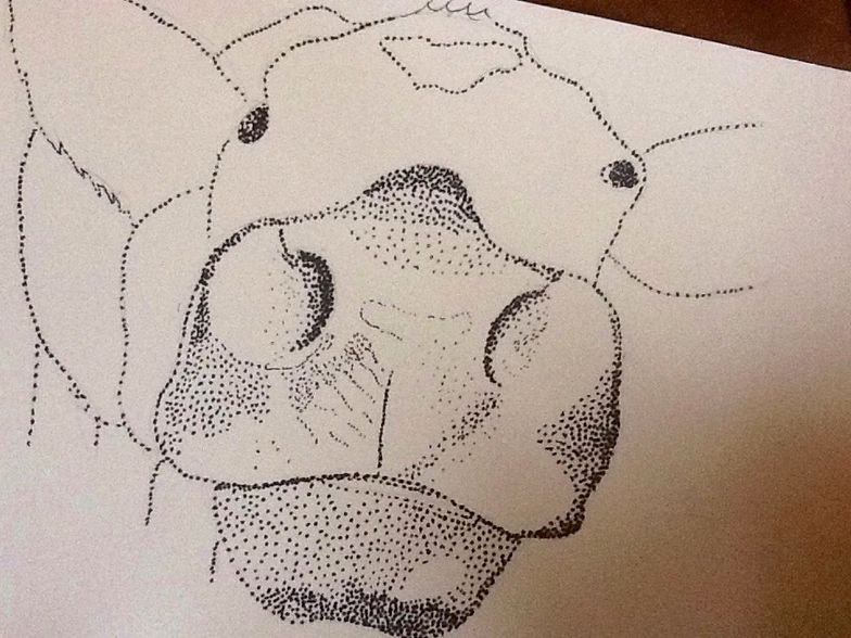 How To Draw An Animal Using Stipple Method B C Guides