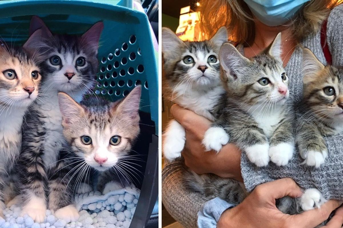3 Bonded Kittens Have Their Dream Come True After Weeks of Waiting